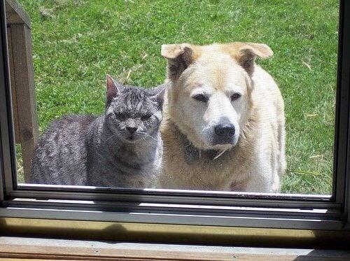 Animais de estimação olhando pela janela