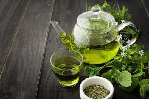 Chá verde, unha de gato e alcaçuz para combater a sífilis