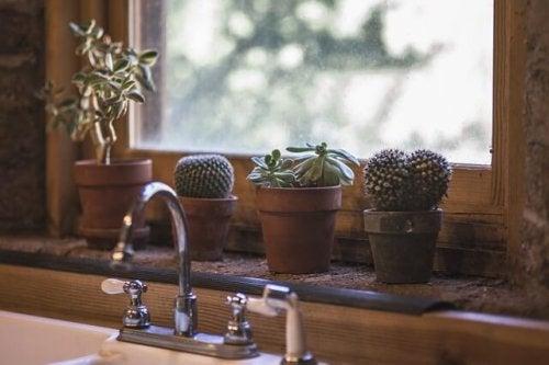 Plantar cactos em casa deixa o lar mais original