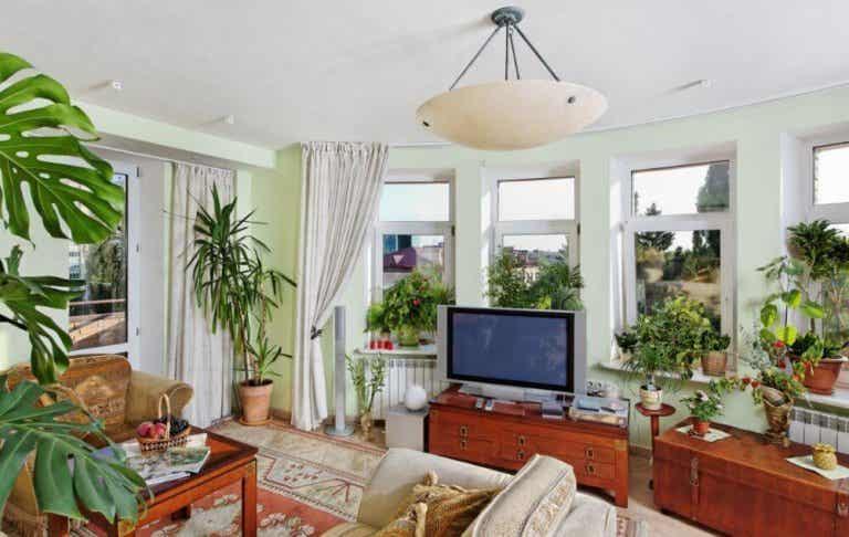 Aprenda a decorar seus espaços com plantas