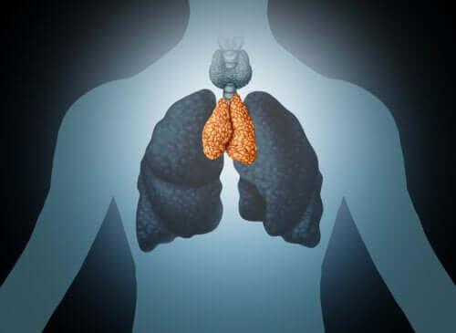 O timo: mediador do bem-estar e do sistema imune