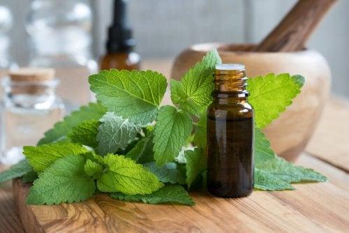 Melissa: uma planta com muitos benefícios para a saúde