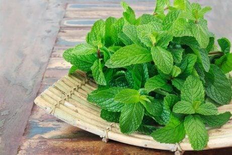 Remédios com hortelã-verde