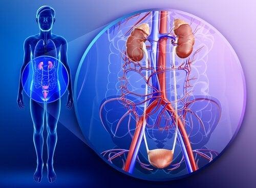 Saúde renal