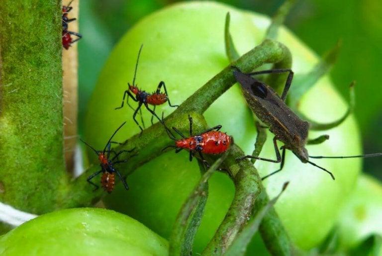 5 venenos para exterminar as pragas