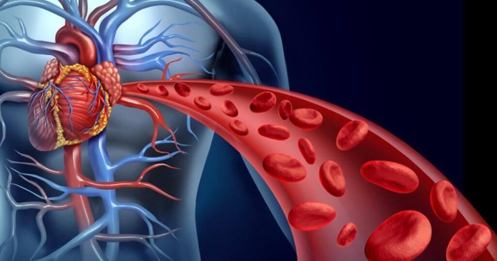 O colesterol impede de reativar a circulação sanguínea