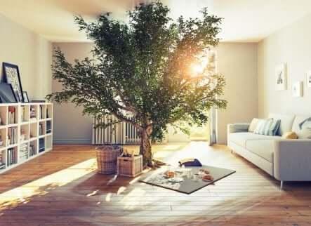 Cuidados ao plantar uma árvore em casa