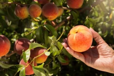 Árvores que dão frutos