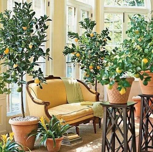Plantar uma árvore em casa
