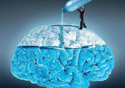 A importância da água para o cérebro