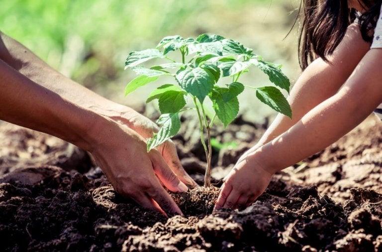 O que saber antes de plantar uma árvore em casa?