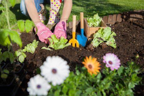 7 maneiras de usar o vinagre no jardim