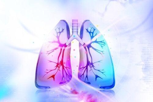 Experimente estes remédios naturais para desintoxicar os pulmões