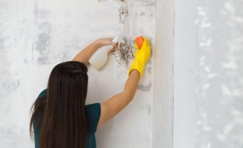Como eliminar o mofo de casa