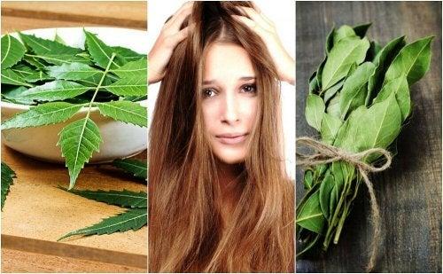 Ervas para o cabelo