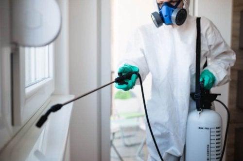 A desinfecção pode ajuda a eliminar os cupins