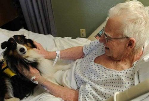 Mulher no hospital com animal de estimação