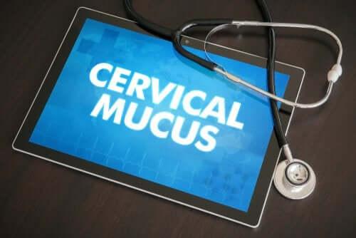 Pode o muco cervical indicar a gravidez?