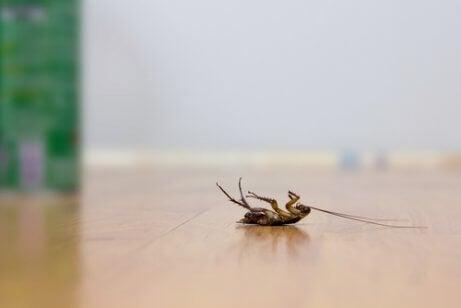 5 truques para repelir baratas sem usar inseticidas