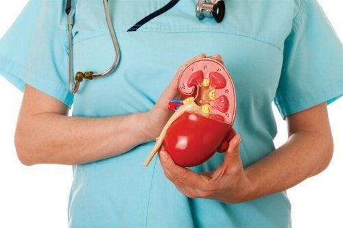 Saúde dos rins