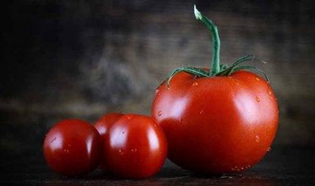 Tomates servem como lanche