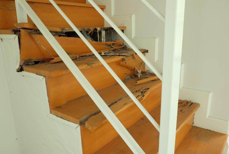 Como eliminar os cupins de casa de forma eficaz?