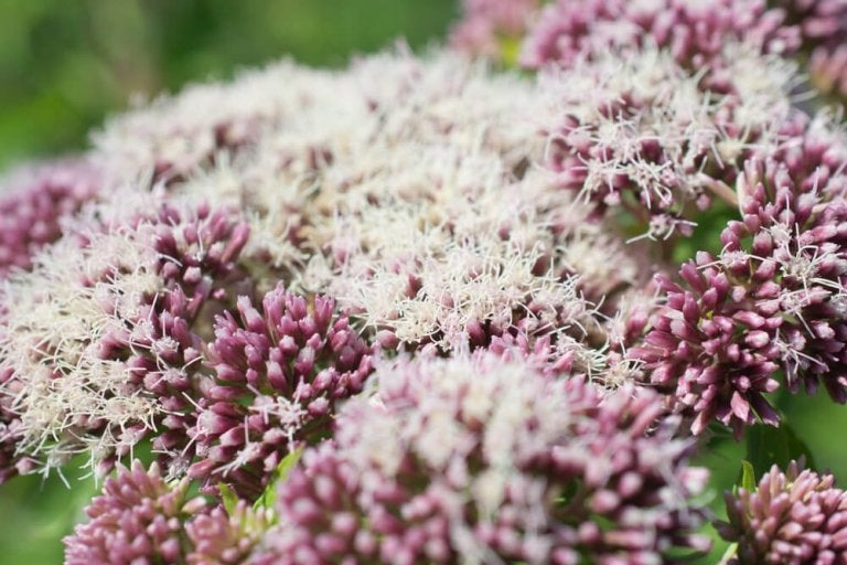 5 remédios com valeriana para curar a insônia