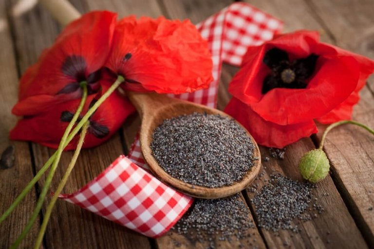 5 benefícios das sementes de papoula para a saúde