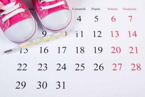 Controlar o ciclo da ovulação é importante se quiser engravidar