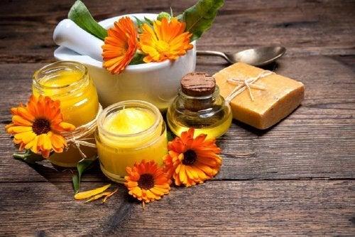 A calêndula é um remédio efetivo contra a sarna