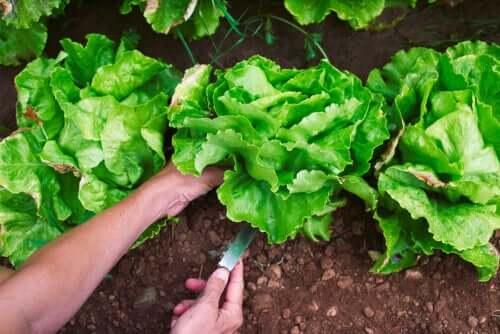 4 projetos de hortas caseiras