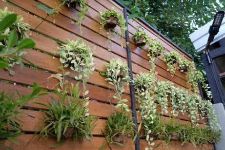 4 ideias para transformar uma parede em um jardim vertical