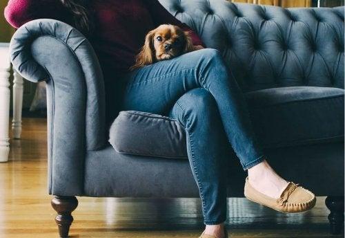 Mulher com cachorro no sofá