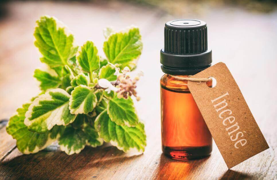 8 usos de óleo essencial de incenso que você vai gostar de conhecer