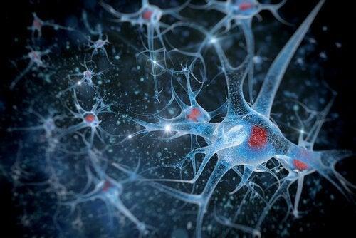Conexões neuronais