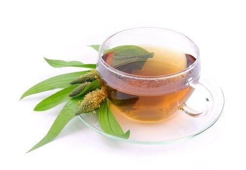 Remédio para a constipação com semente de tanchagem