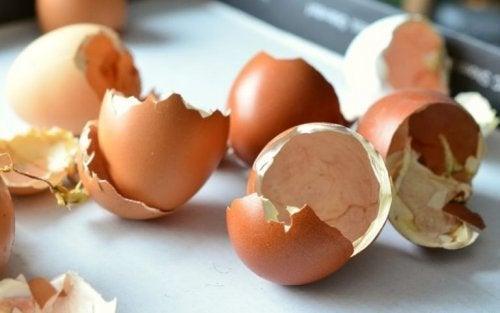 Fertilizante orgânico: casca de ovo
