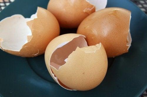 Casca de ovo: conheça seus usos em casa