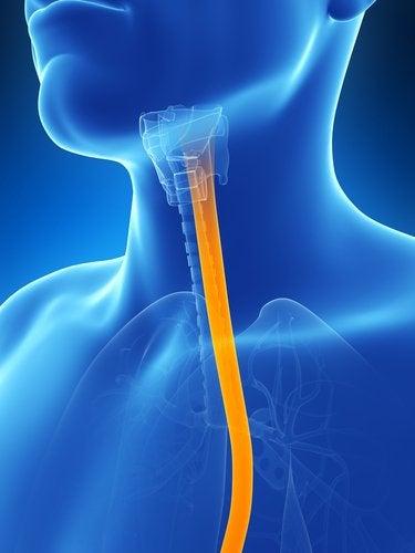 Combata aos sintomas da esofagite com 5 soluções naturais