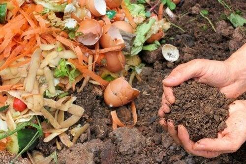 Fertilizante orgânico para as plantas: prepare o seu!