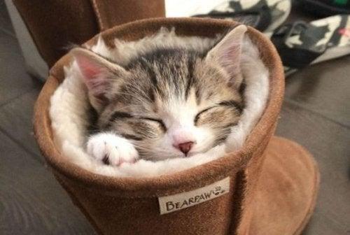 Gato dorminado em um acessório para as mascotes