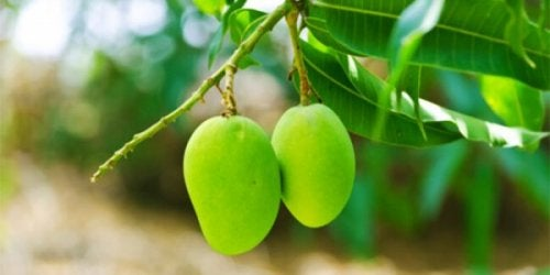 O limão ajuda a normalizar a glicose no sangue