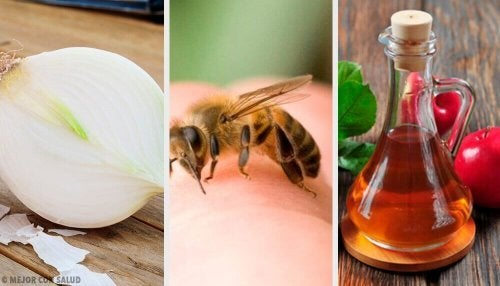 Picadas de abelha: os melhores tratamentos caseiros