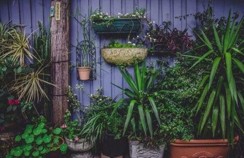 Como decorar um jardim pequeno