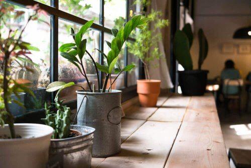 Os benefícios de ter plantas em casa