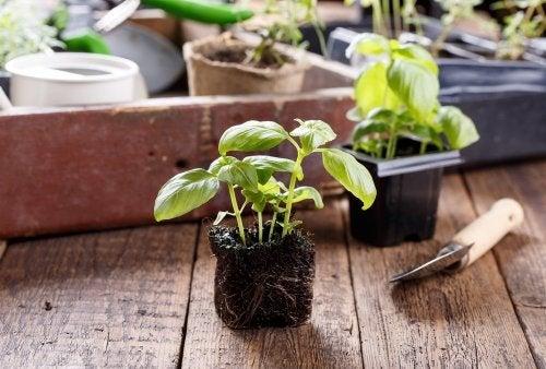 Ter plantas em casa, purifica o ambiente