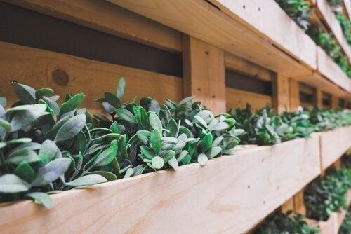 6 elementos que podemos reciclar para decorar o jardim