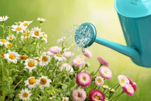 Faça seu próprio regador para o jardim