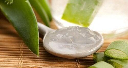 Gel de aloe vera para aumentar as plaquetas naturalmente