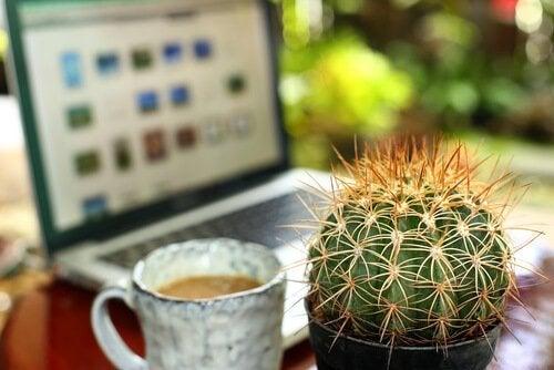 Cactus são plantas de interior